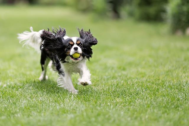 dog-garden-shedman-dog-shed